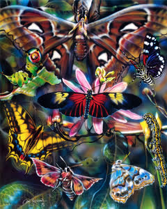 Moths And Butterflies